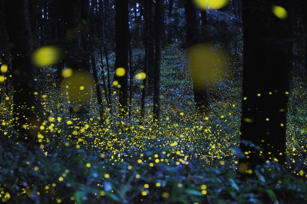 05-firefly-image_th1