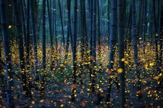 fireflies-long-exposure-photography-2016-japan-19