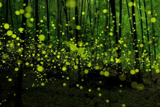 long-exposure-fireflies-nagoya-city-yume-cyan-1