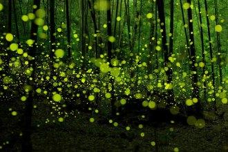 long-exposure-fireflies-nagoya-city-yume-cyan-1