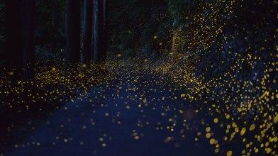longue-exposition-des-paysages-japonais-illumines-par-le-voyage-des-lucioles6