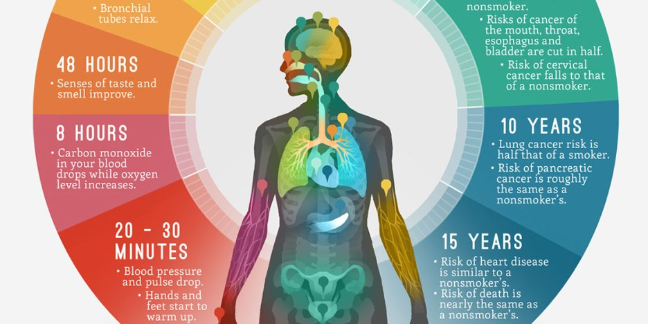 portfolio-6-infographic-cvs