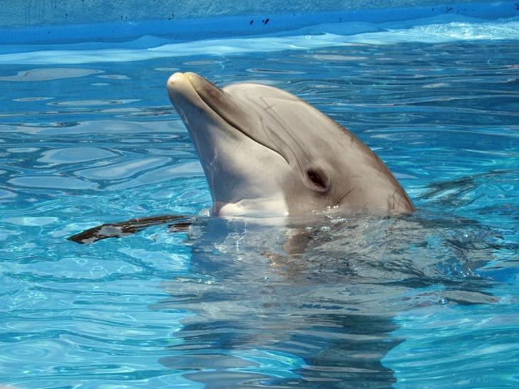 dolphin-597527_1280